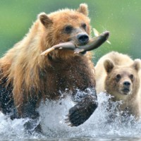 Bear Attack SEO for IT providers